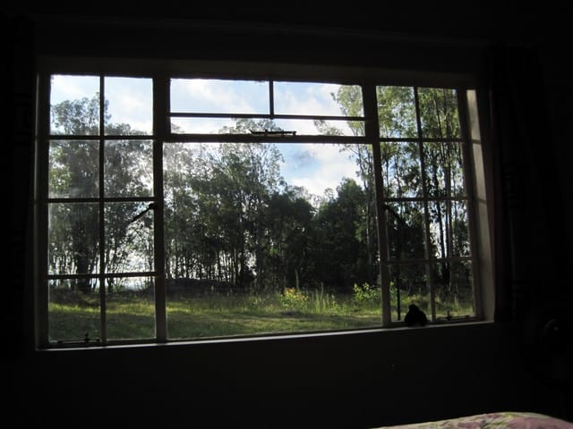 describe view your bedroom window essay Imagine that you were looking through your bedroom window in the early hours of one morning, you saw the character in sign up to view the whole essay and.