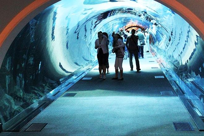Dubai_Mall_Aquarium designrulz (5)