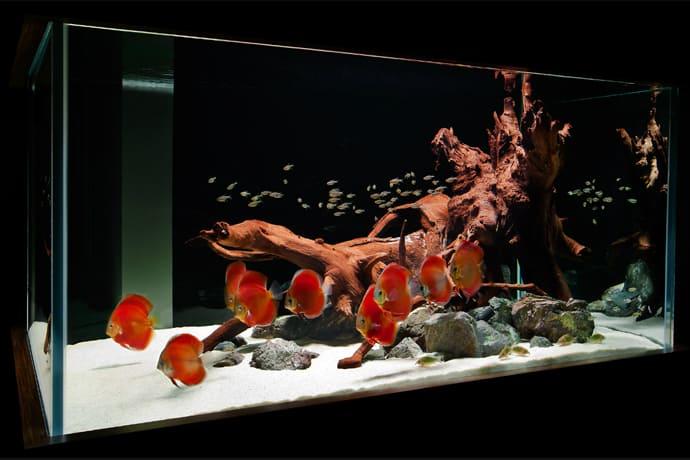 aquarium house designrulz (11)