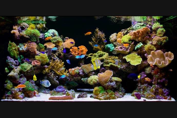 aquarium house designrulz (19)