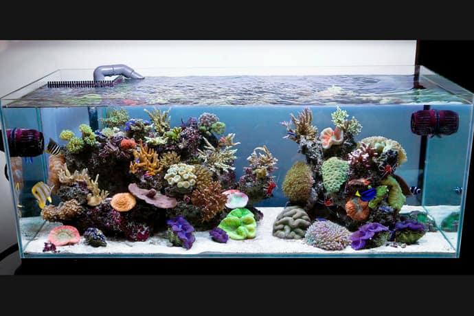 aquarium house designrulz (3)