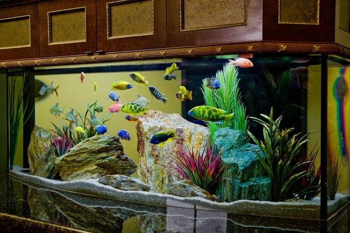 aquarium house designrulz (9)