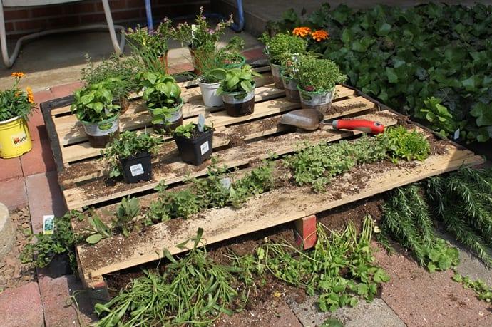 pallet garden designrulz (15)