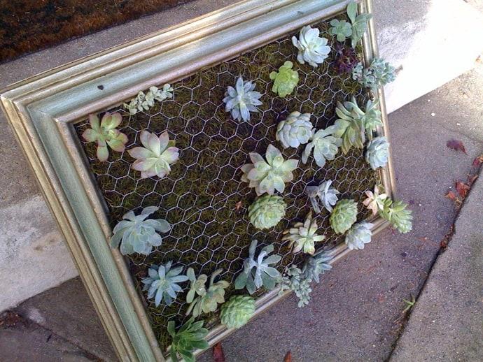 Succulent Gardens -designrulz-001