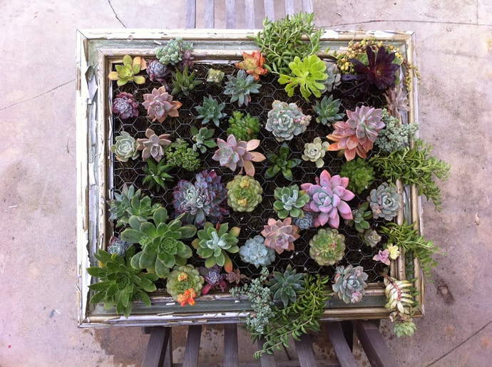 Succulent Gardens -designrulz-002