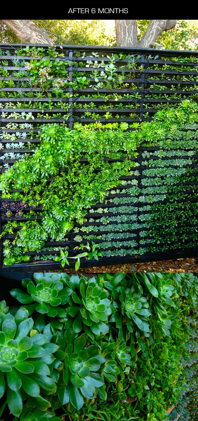Garden Centre: Cool DIY Green Living Wall Projects For Your Home