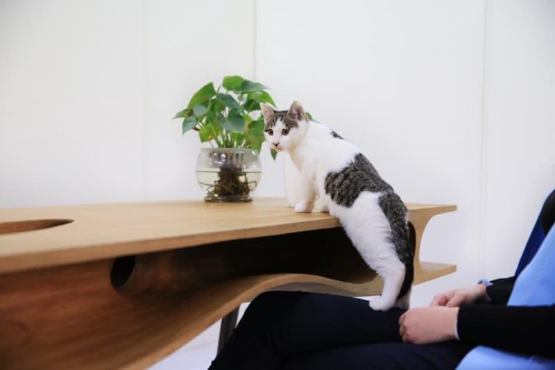 cat desk designrulz (2)