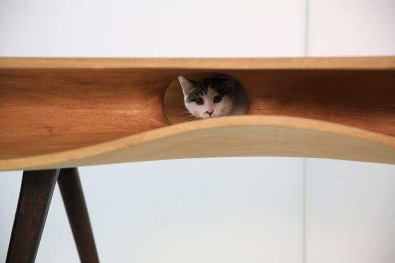 cat desk designrulz (4)