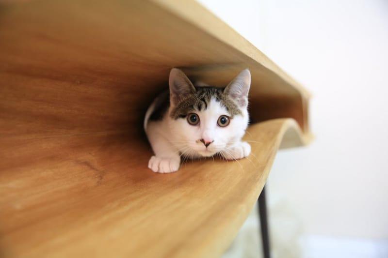cat desk designrulz (5)