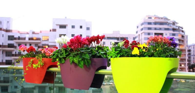 PLANT 2 (5)