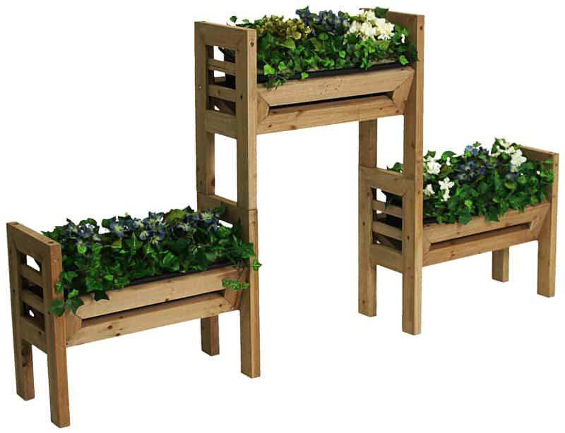 PLANT 3 (1)