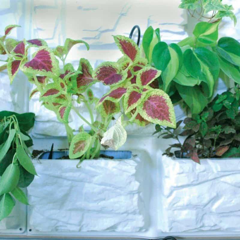 plant 12 (2)