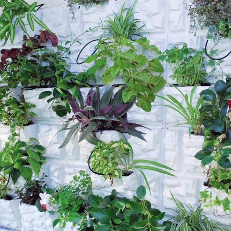 plant 12 (3)
