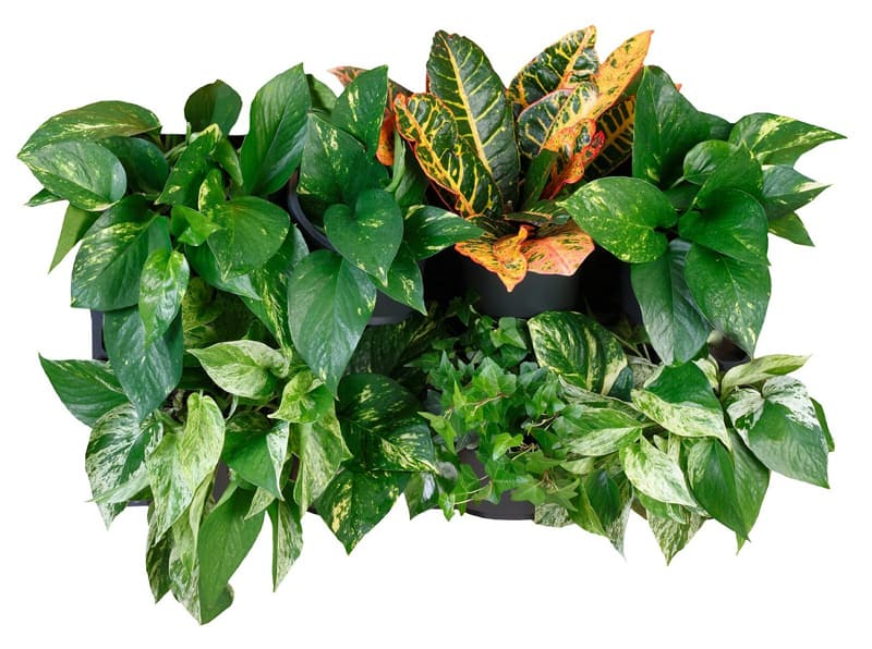 plant 13 (2)