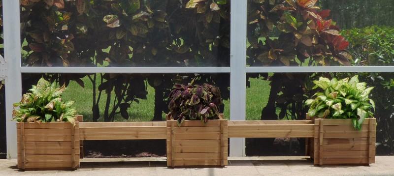 plant 14 (2)