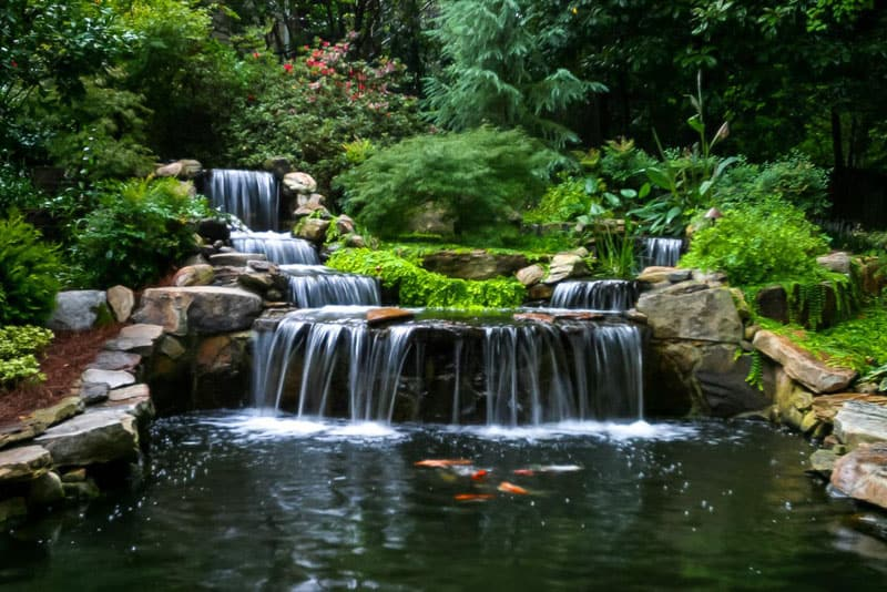 Pictures Of Fish Ponds In Backyards