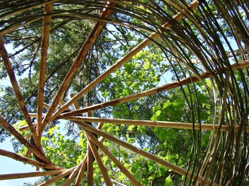 bamboo 12