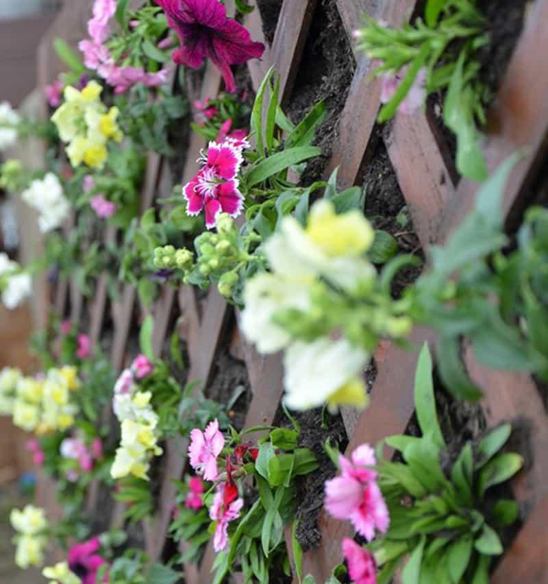 vertical-flower-garden-6