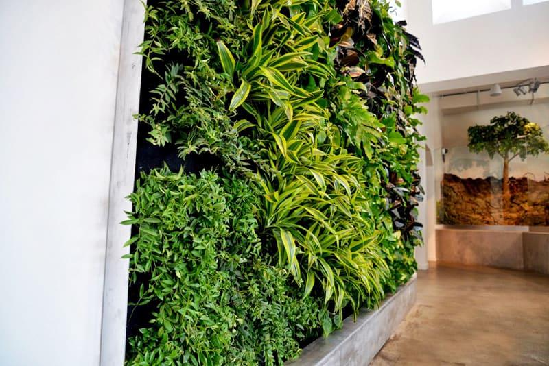 plants on walls_designrulz (10)