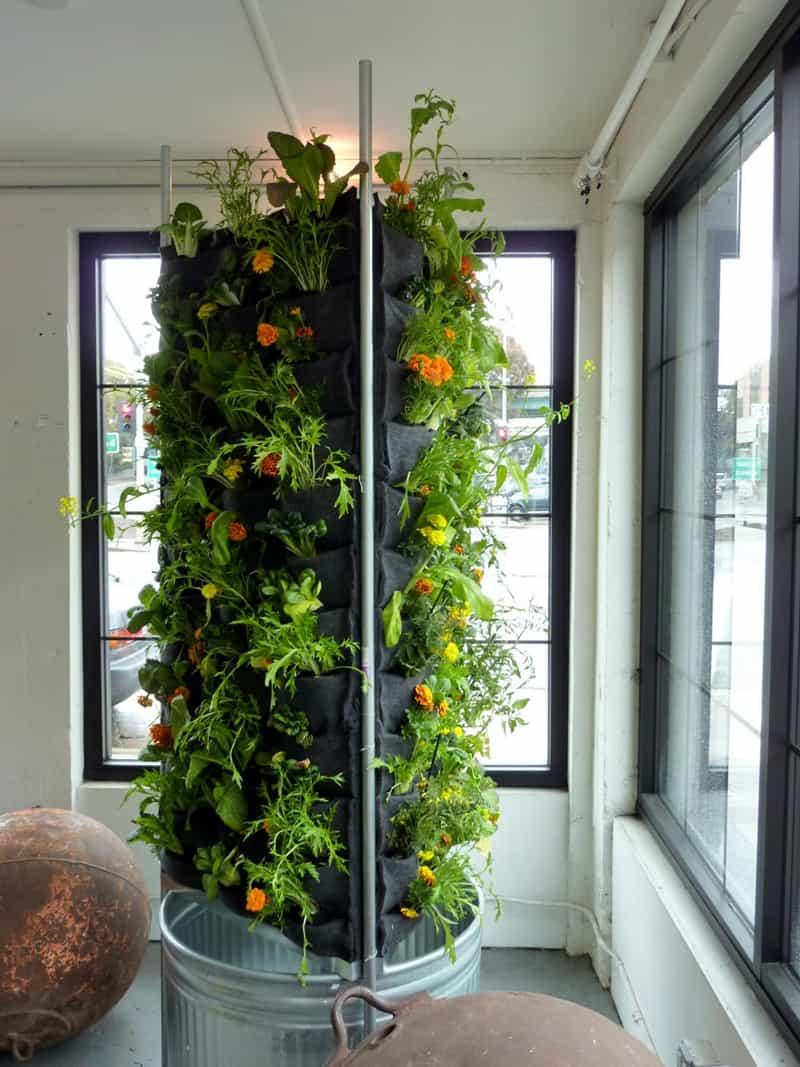 plants on walls_designrulz (23)