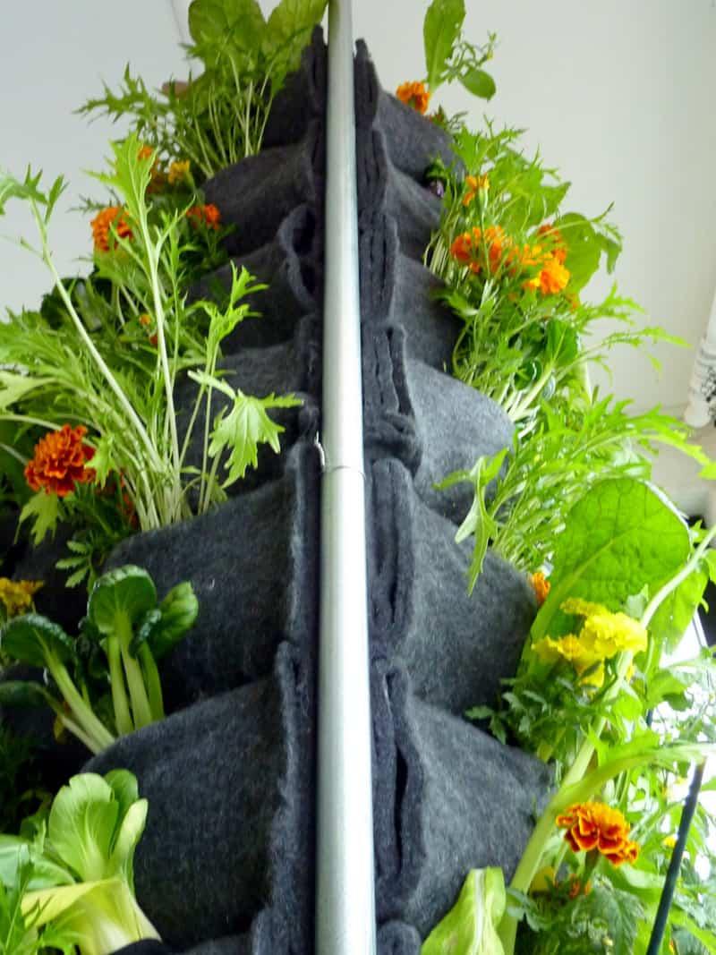 plants on walls_designrulz (24)