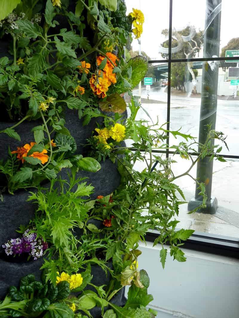 plants on walls_designrulz (25)