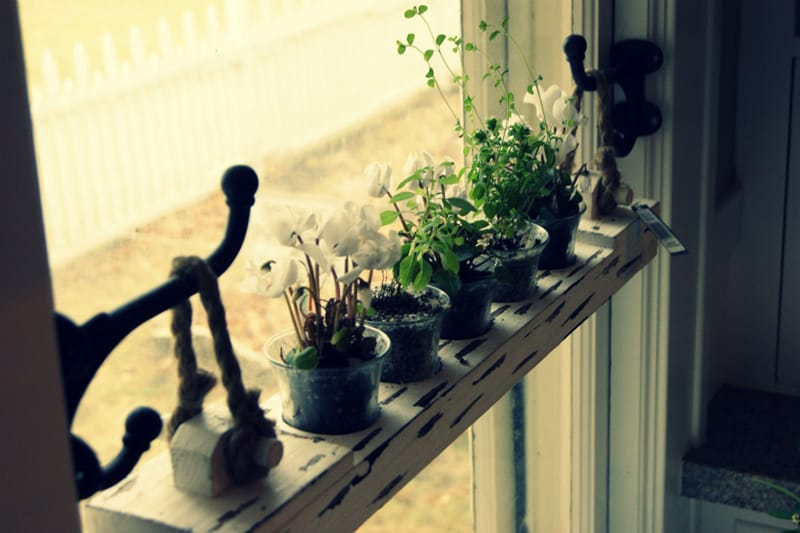 shelf-window_designrulz (1)