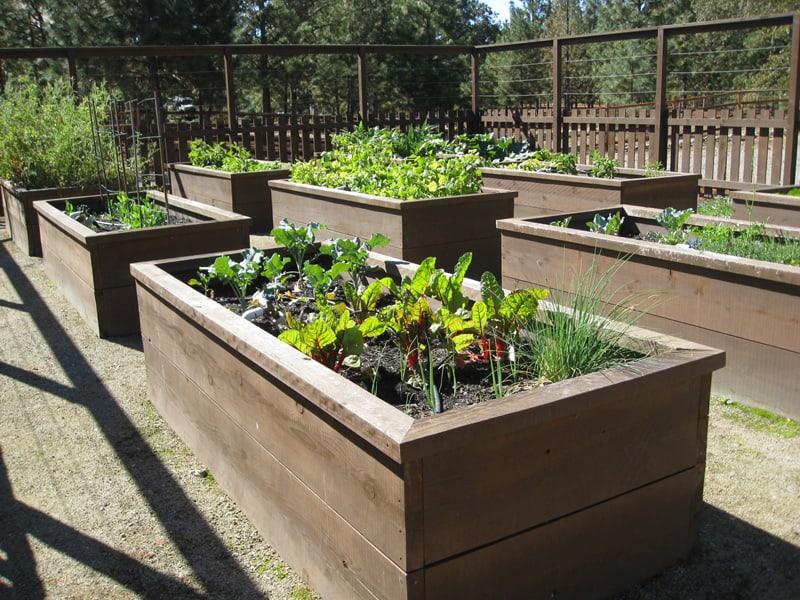 Free Form Raised Garden Bed