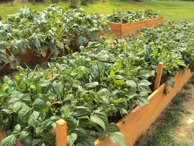 Garden Raised Beds (17)