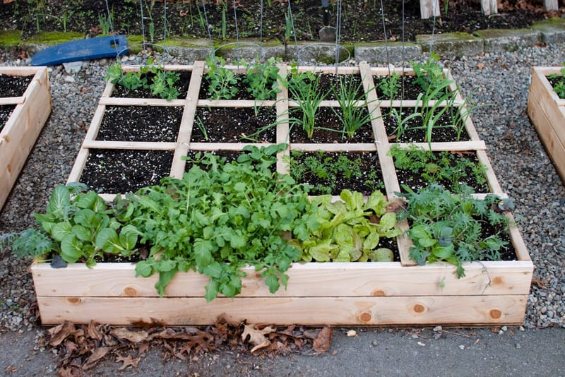 Garden Raised Beds (22)