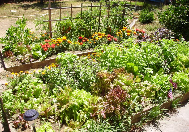 Garden Raised Beds (30)