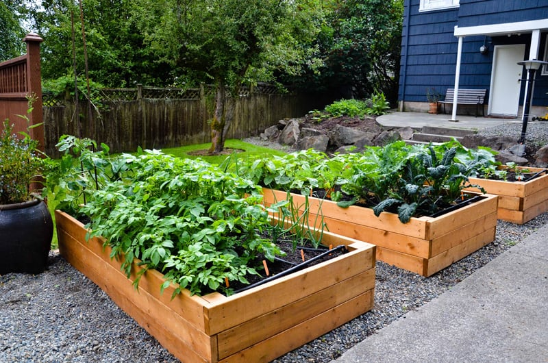 Garden Raised Beds (31)