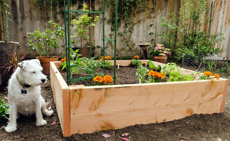 Garden Raised Beds (34)