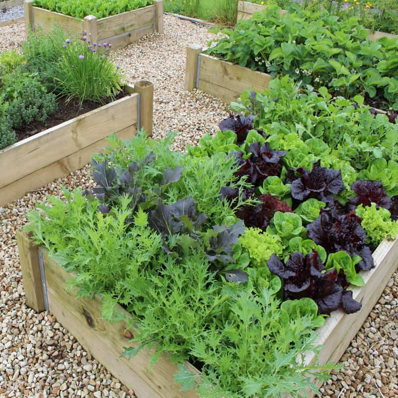 Garden Raised Beds (39)