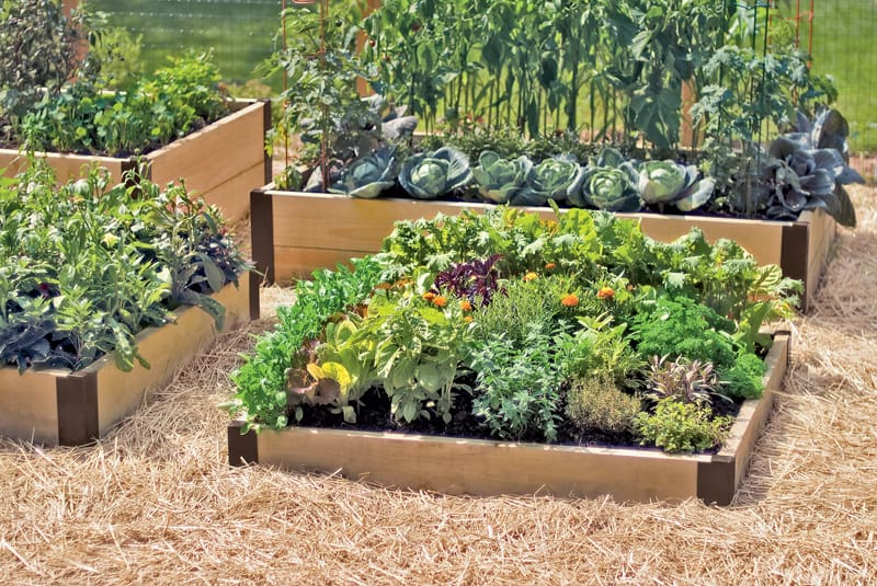 Garden Raised Beds (4)