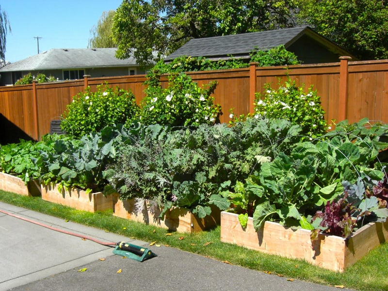 Garden Raised Beds (43)