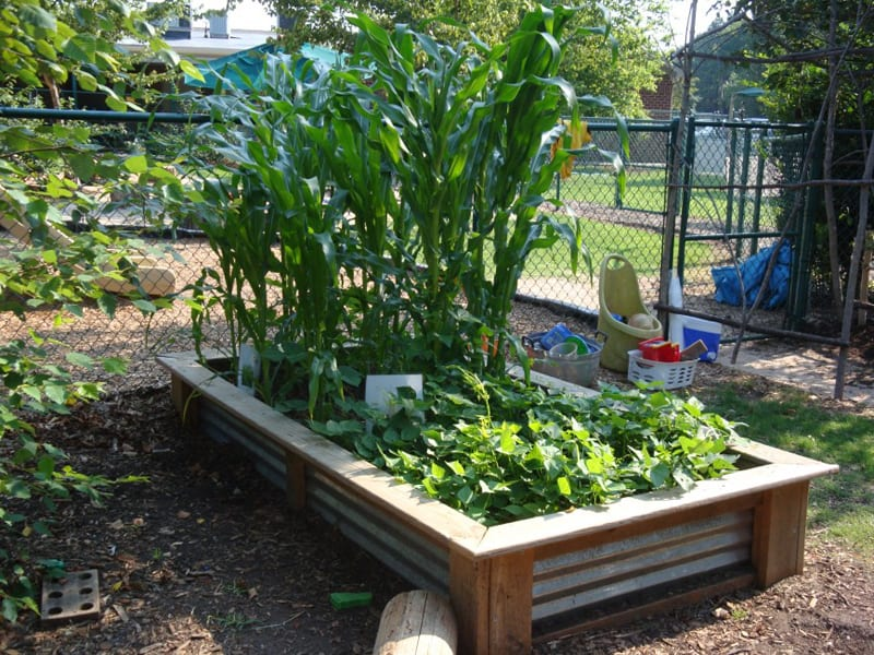 Garden Raised Beds (44)
