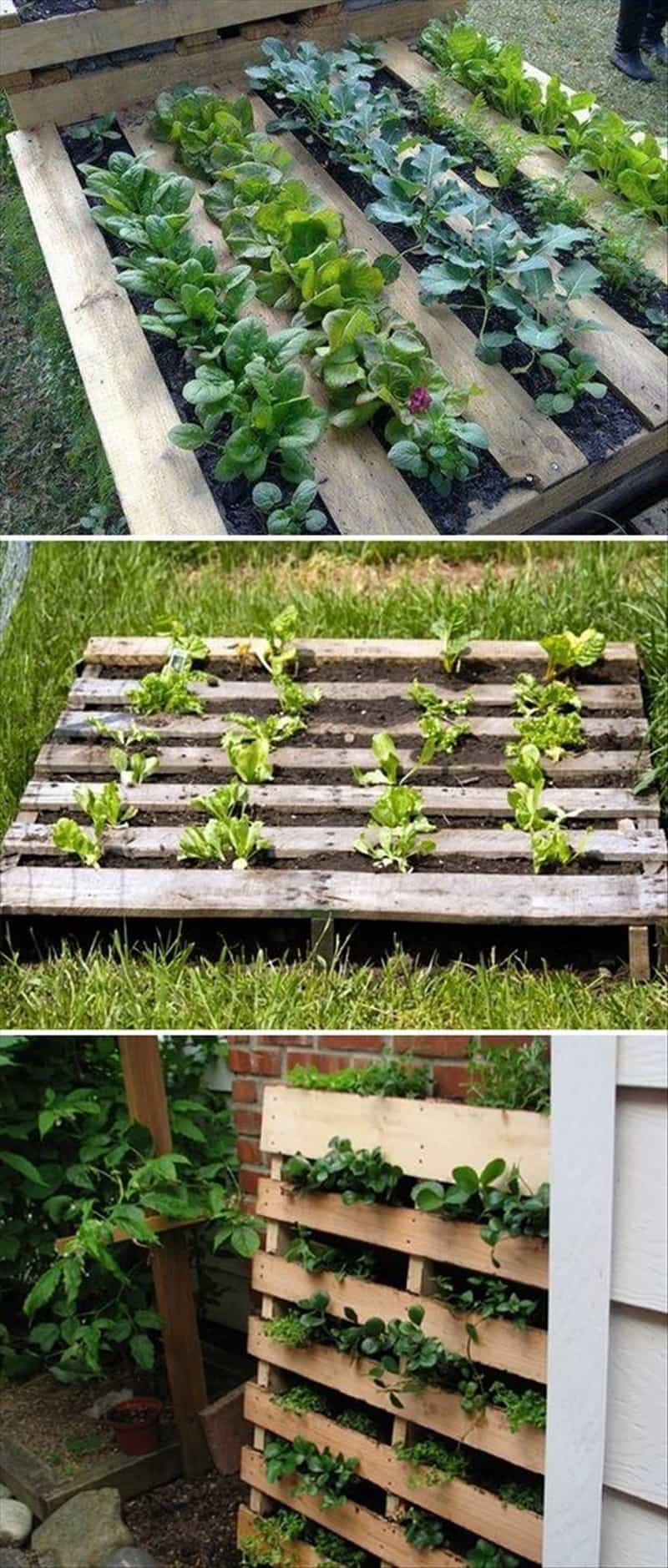 Garden Raised Beds (5)