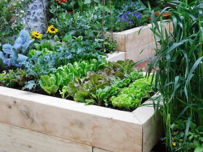 Garden Raised Beds (8)