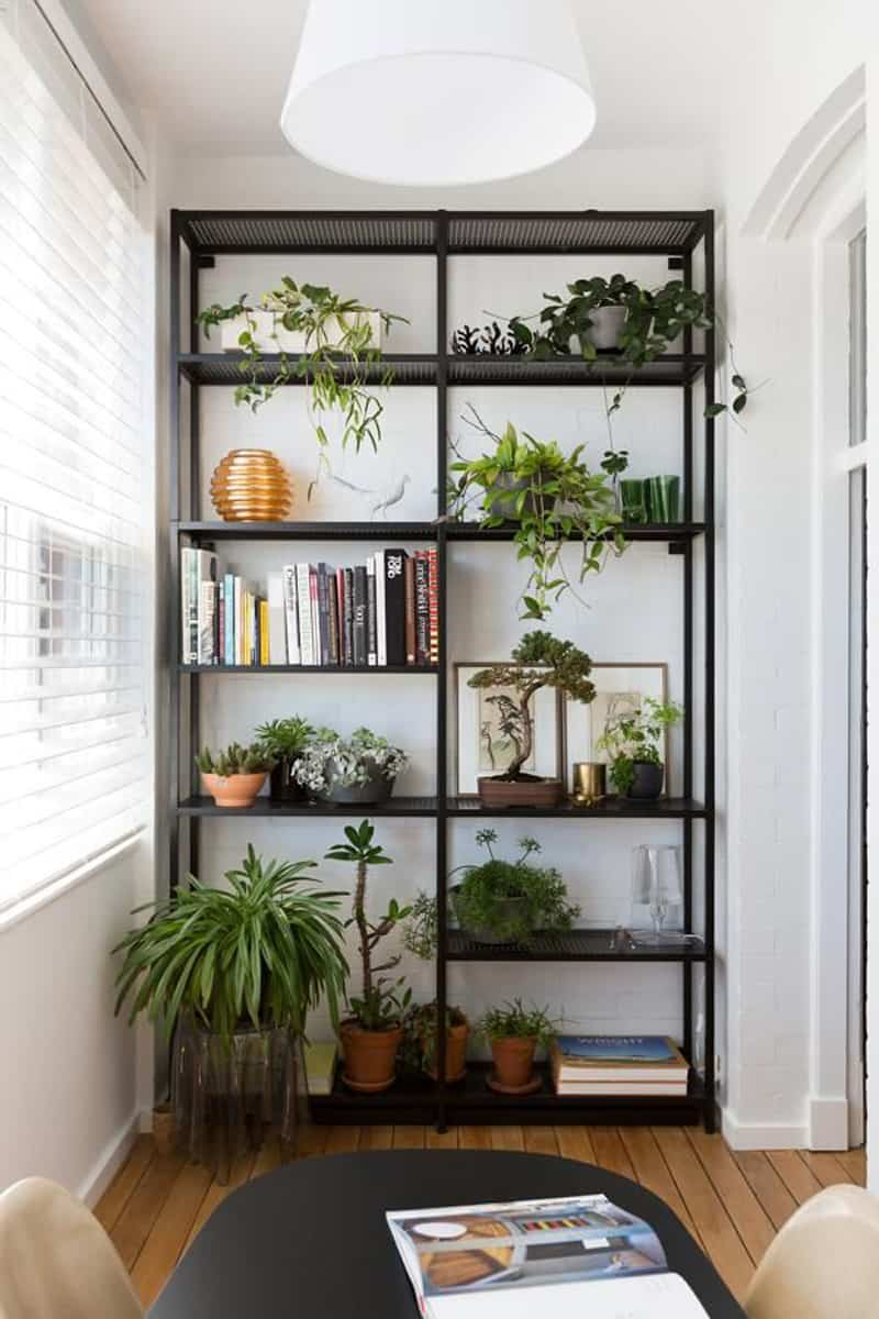 How to decorate your interior with green indoor plants and - Decoration de petit appartement ...