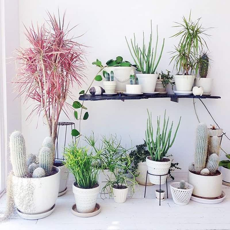 How to decorate your interior with green indoor plants and save money - How to decorate your house ...