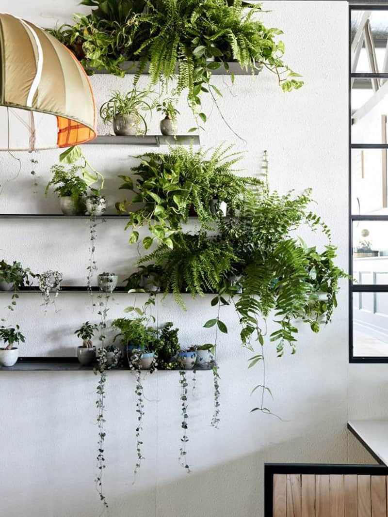 How to decorate your interior with green indoor plants and for Green plants for garden