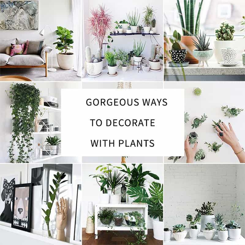 How to decorate your interior with green indoor plants and for Decorating a house