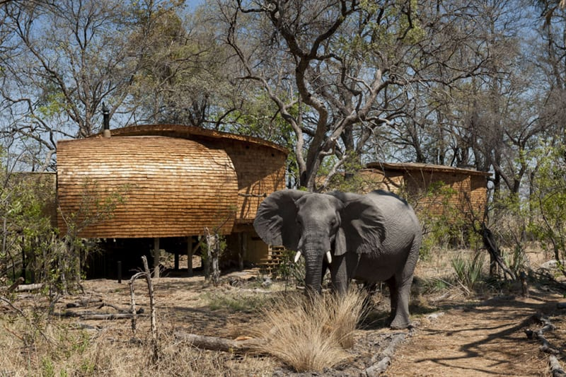 Sandibe Okavango Safari Lodge (1)
