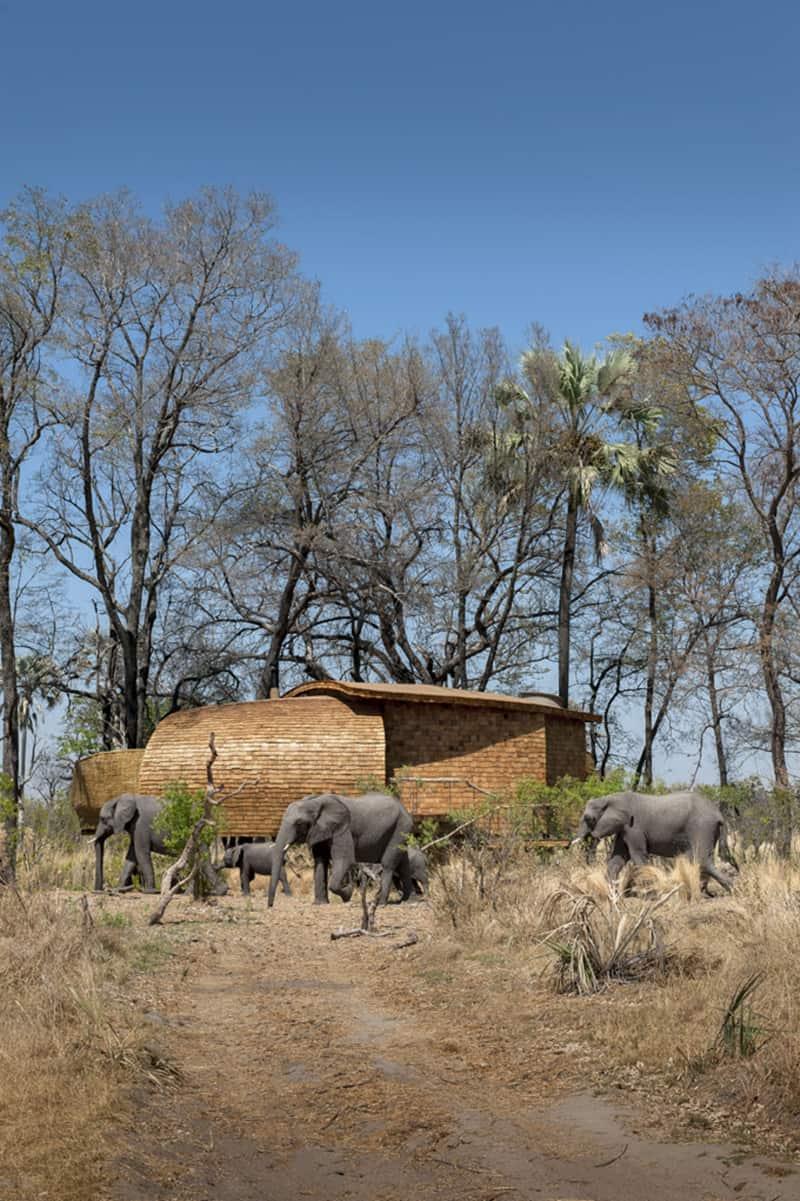 Sandibe Okavango Safari Lodge (3)