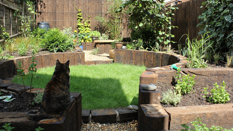Cat Friendly Garden Designrulz(2)