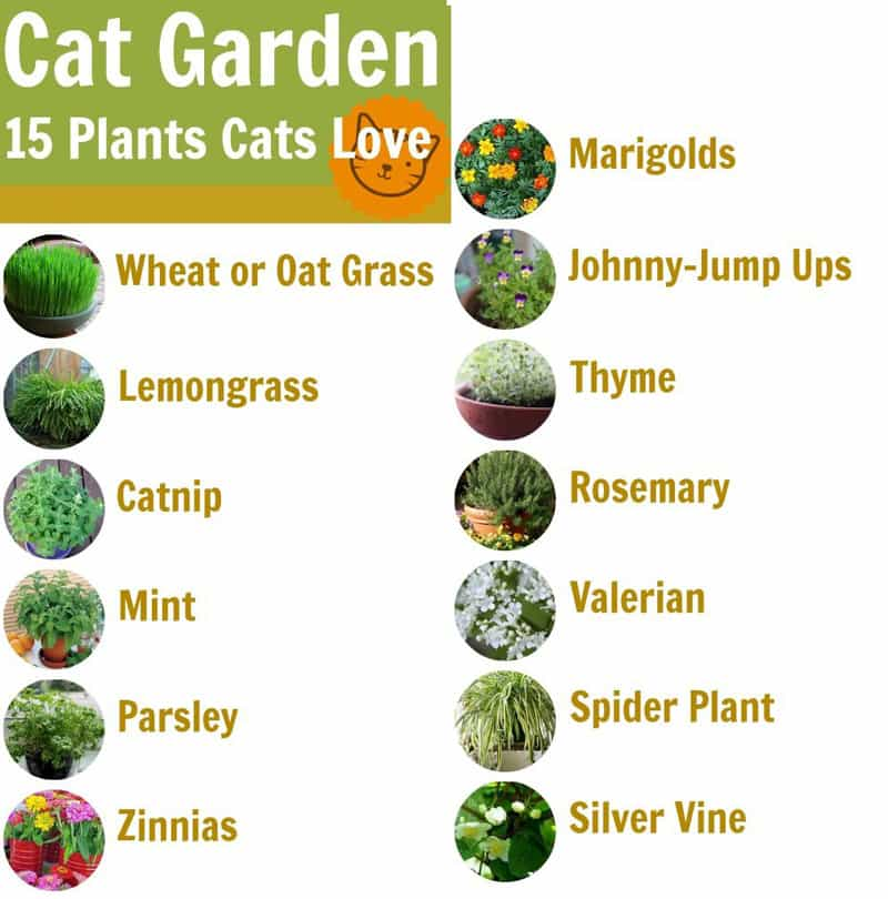 Top 10 Tips of How to Create a Cat-friendly Garden