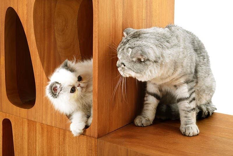 Sculptural Wood Cubes Designed For Playful Cats_designrulz (2)