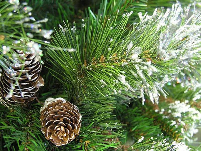 glittery-pine-closeup2