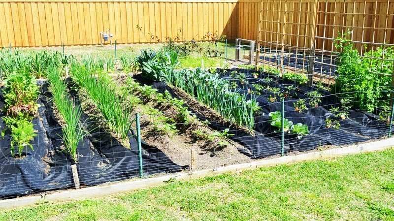 How to Prepare Your Garden for Spring Planting-designrulz (3)